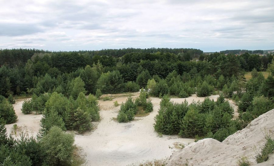 Landscape Ukraine Nature Trees Photo Canon