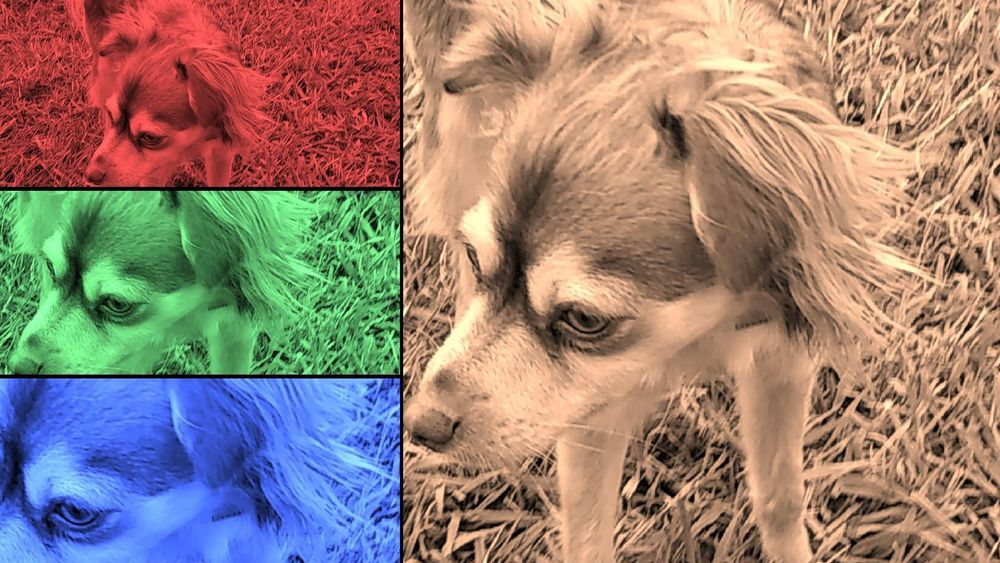 EyeEm Selects Pets Dog No People Animal Themes Domestic Animals Outdoors Close-up Day Mammal Multi Colored Beautiful View Wanting Stare Back At You... 4 In 1 B&w Green Color Red Color Is Powerfull Alone Time Front View Red Torn