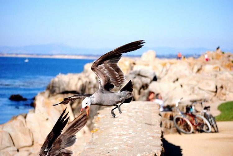 Monterey California Birds Beach