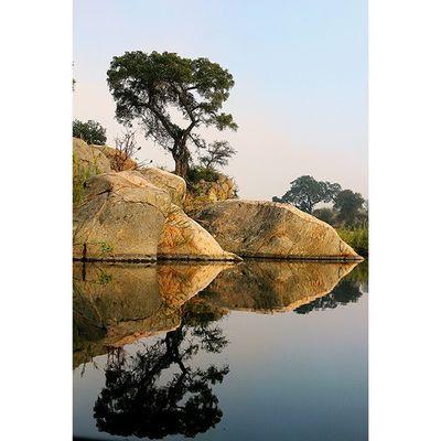 Mirror in the kruger. Africanamazing Natureaddict Animalsaddict Squaredroid @Animals Wildlife Igersmp Africa