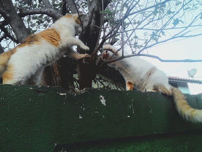 Fightclub Hi5 Cats
