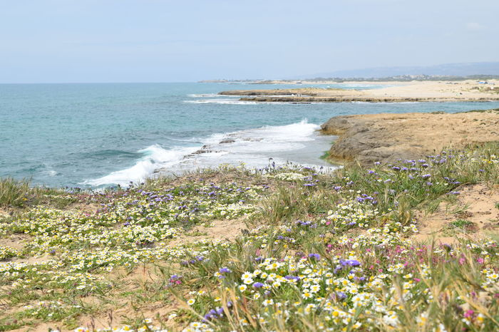 Beach Beauty In Nature Tranquil Scene Flower Horizon Over Water Nature No People Outdoors Plant Scenics Sea Water Wildflower EyeEm Diversity Tourist Attraction  Blooming Blossom Flowers Springtime Spring Spring Flowers Israel Calm Adventure Travel Destinations