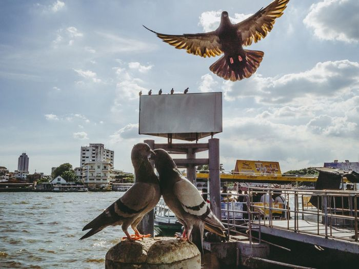 Bird flying by sea against sky in city