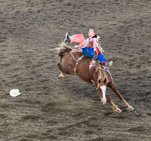 Brown Horse Bucking Horse Bucking Horse Gear Cowboy Cowboy Boots Cowboy Bucked O Cowboy Hat Day Everyday Emotion Lifestyles Mammal Nature Outdoors Rodeo Drive Rodeo Time Summer Activity White Faced Horse On The Way