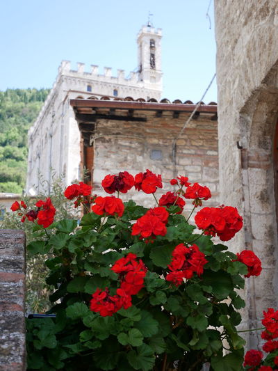 Close-up of red flowering plant against building