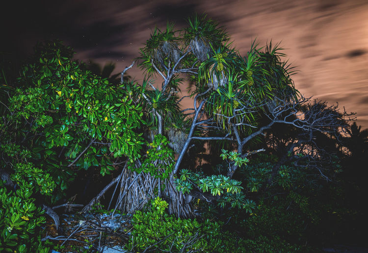 Moon Nights Cook Islands Atiu Moon MoonNights Night Photography Night Walks Aitutaki Contrasting Colors Cook Islands Dark Beauty Darkness And Light Foreground And Background Fullmoon Haunting  Island Lightpainting Longtimeexposure Moonlight Movement Mysterious Mystical Nightscape Nightsky Pandanus Palm Tree Rarotonga Stars