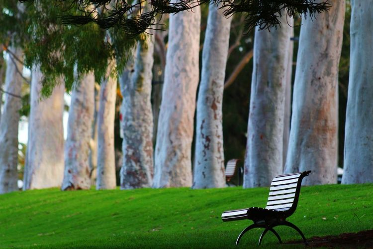Faces Of Summer Trees Chair Grass