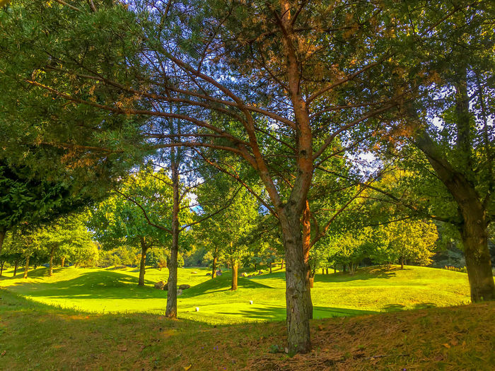 Golf Course with Trees and Hills in Switzerland. Creativity Golf Golf Course Golfing Green Color Nature Sunlight Sunny Tranquility Tree Beauty Day Fairway Fairway On Golf Course Forest Golf Club Golfer Hill Hobbies Lesiure Activity Sky Sport Summer Switzerland Tree Area
