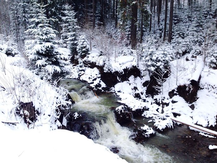 Карпаты буковель Karpaty Bukovel Winter Snow ❄ Snow Carpathians