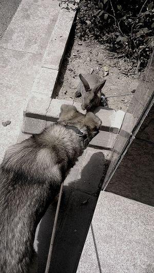 Dog Animals Rabbit