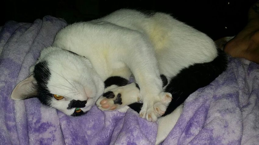 My neiko.... he's such a cuddle buddy