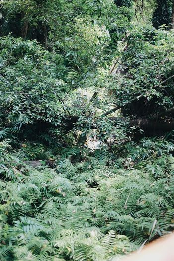 View of fern in forest