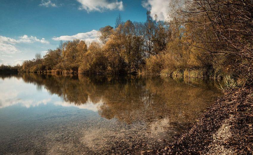 See Tree Water
