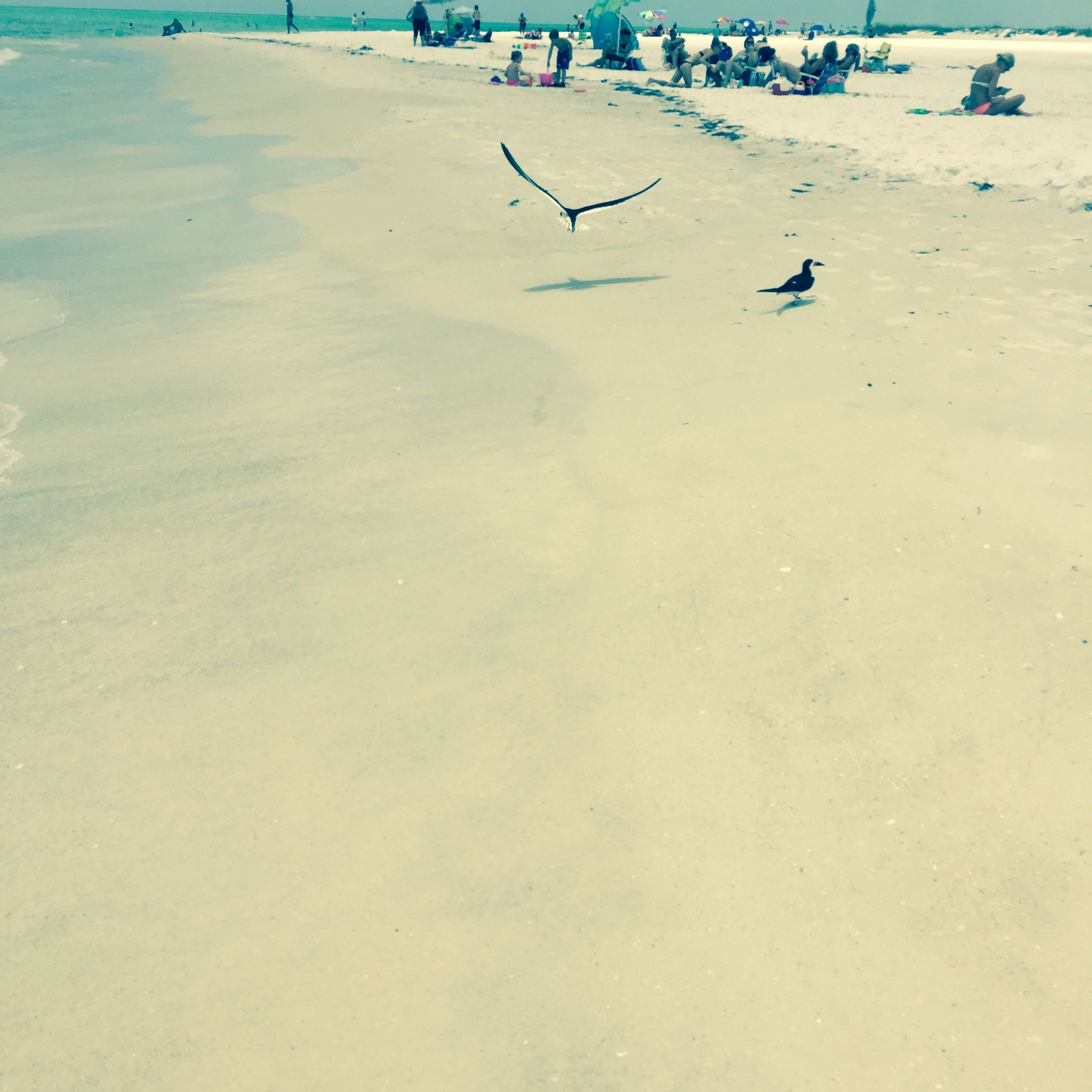 bird, animal themes, sand, beach, animals in the wild, flying, wildlife, high angle view, nature, seagull, tranquility, day, outdoors, beauty in nature, tranquil scene, shore, incidental people, sunlight, footprint