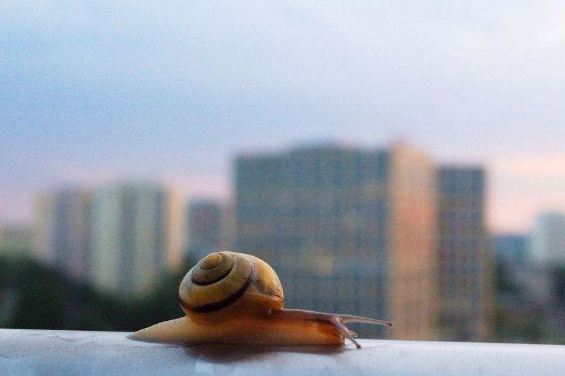 Close-up of snail on railing by city against sky