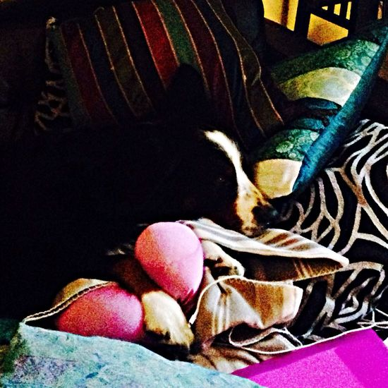A princess on visit... Bernersennen Dogs Sleepy Doggy My Dogs Are Cooler Than Your Kids