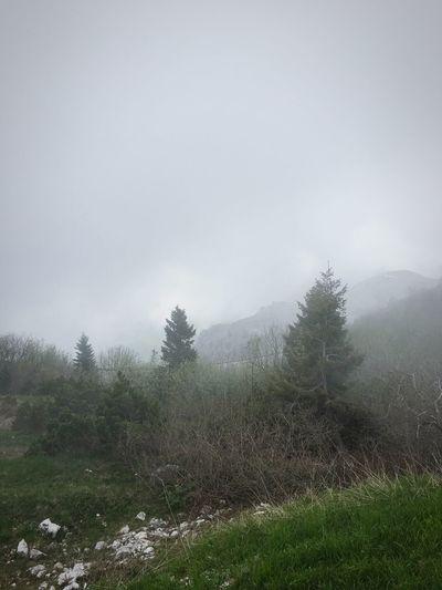 Monte Grappa Montegrappa Nebbia Foschia Mist Treescape Landscape Misty Mountains