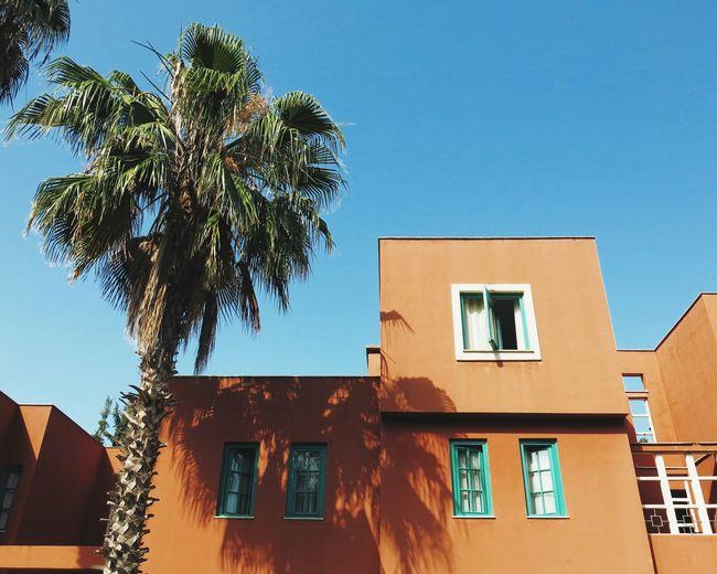 Perfect vacation spot Architecture Window Palm Tree Summer Clear Sky Vacation VSCO Vscocam Turkey Traveling Tekirova/Kemer/Antalya Tekirova Tekirov Vacation Time