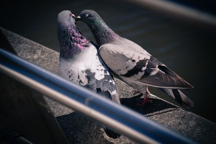 High Angle View Of Pigeons On Concrete Wall During Sunny Day