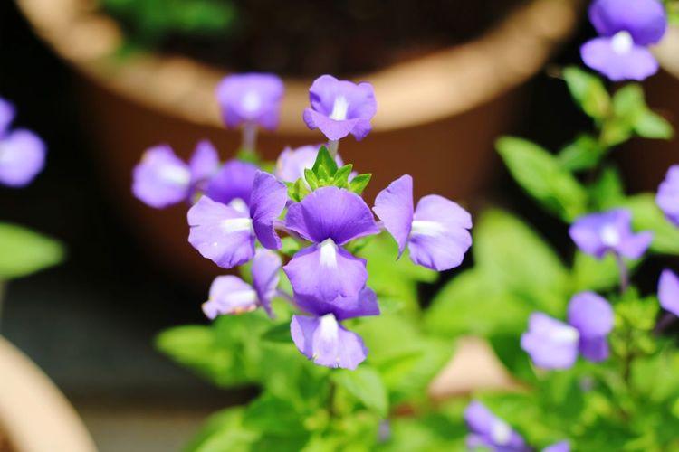 Springtime Front Or Back Yard Botanical Garden Flowering Plant Orchid