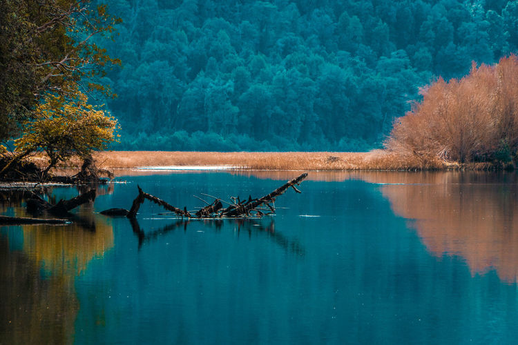 Black river... Peace Animal Animal Themes Animal Wildlife Animals In The Wild Autumn Beauty In Nature Bird Day Forest Lake Nature No People Outdoors Plant Reflection River Scenics Scenics - Nature Tourism Tranquil Scene Tranquility Travel Destinations Tree Water