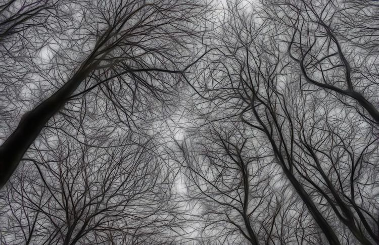 Reach for the Sky Branches Canopy Tree Winter Above Abstract Backgrounds Bare Tree Beauty In Nature Branch Day Low Angle View Nature No People Outdoors Pattern Sky Skyscraper Tree Up Winter