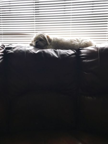 Nap time One Person Relaxation Indoors  Mammal Pets Dog Home Interior Day Puppy Love Nap