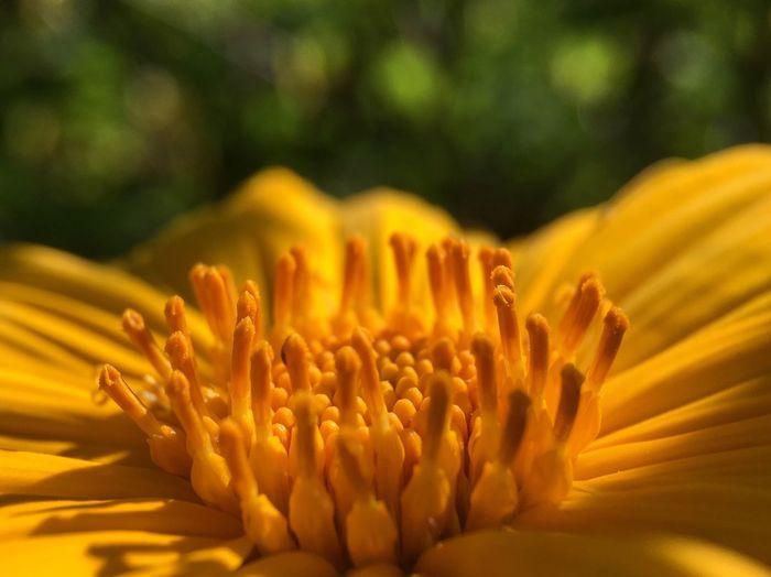 Nature Photography Flowers Garden Photography Yellow Flower Macro Beauty