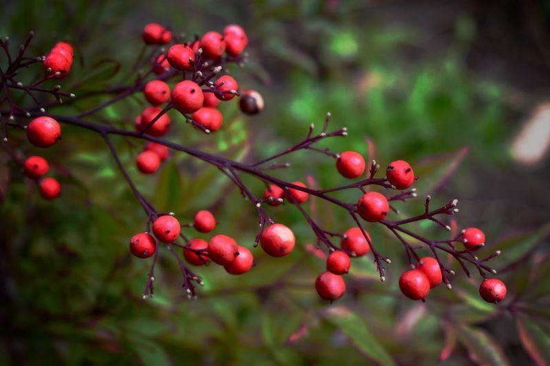 Fruit Red Food