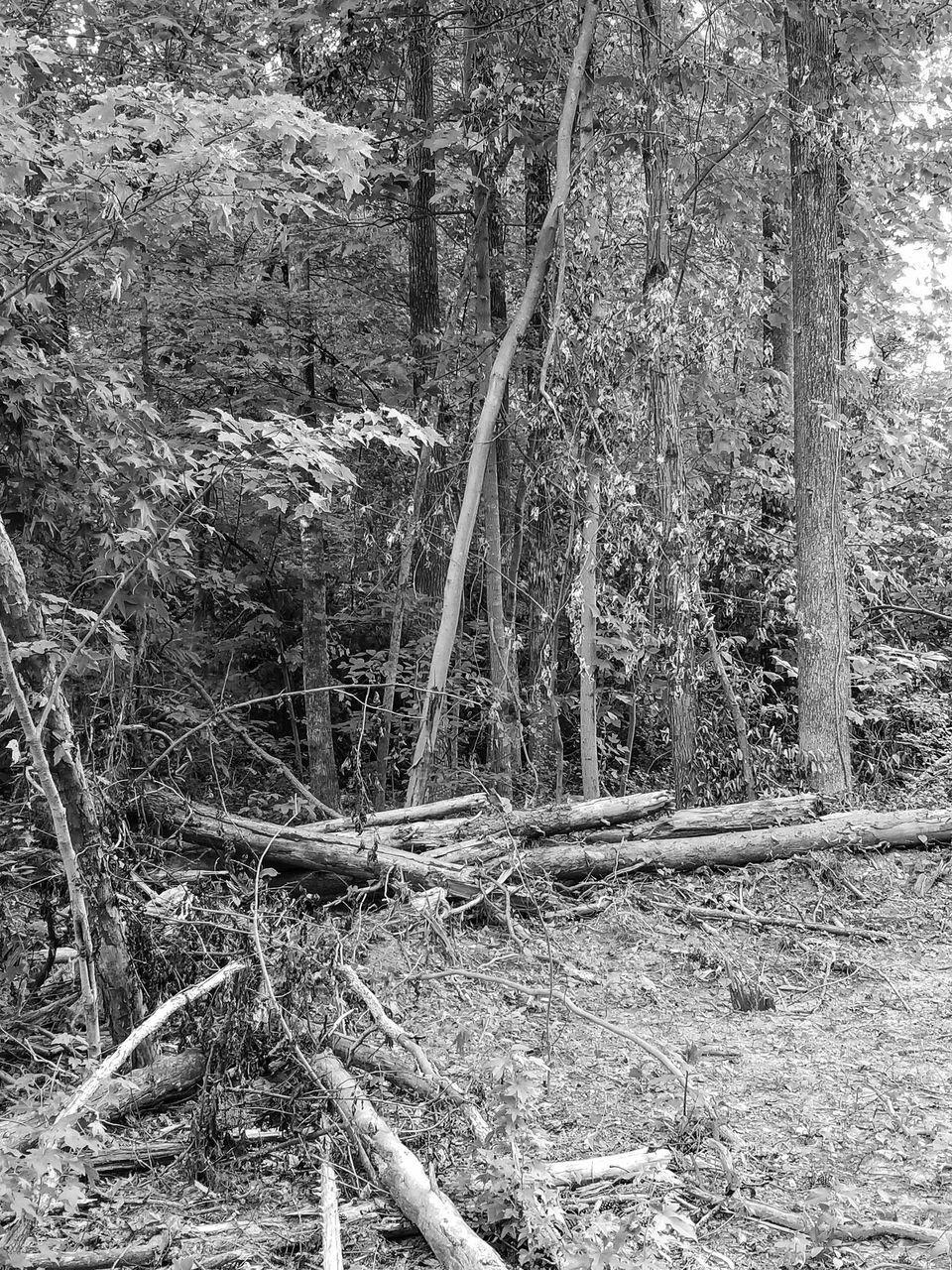 FALLEN TREE IN FIELD