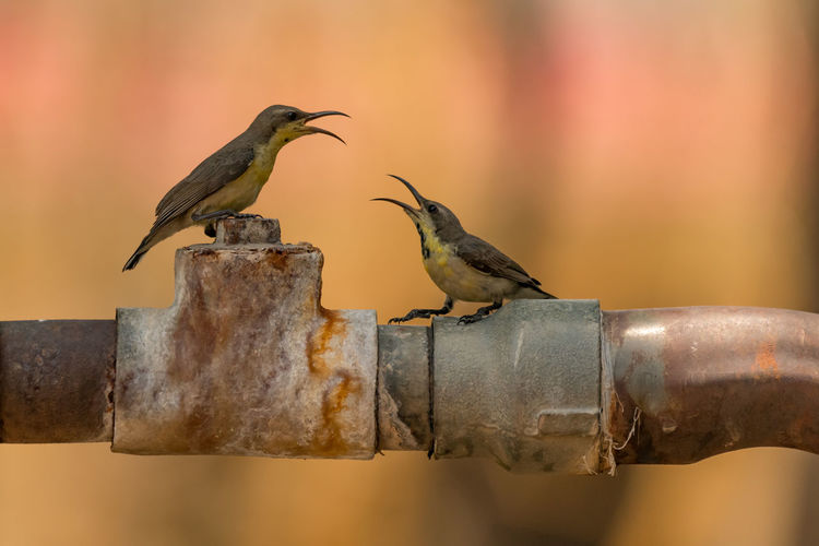 Close-Up Of Two Birds Perching Outdoors