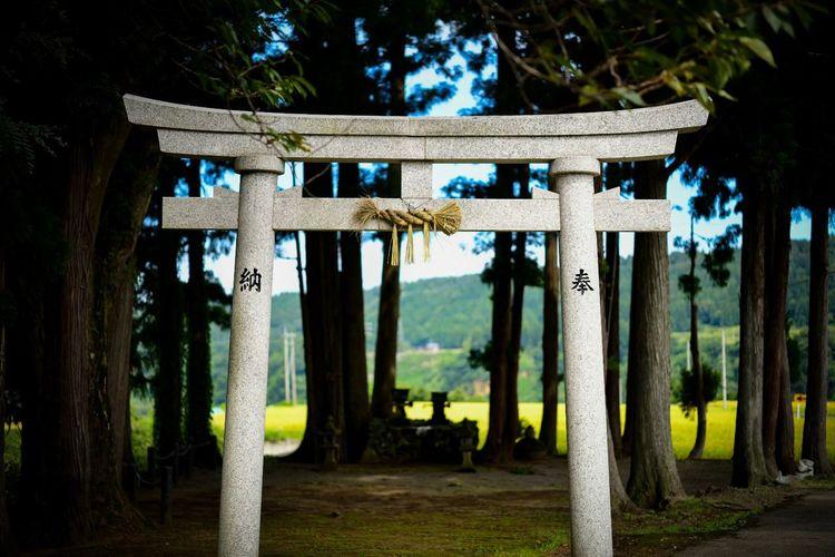 夢に出てきそうな風景。 Torii Gate TORII Shinto Shrine Tree Religion Plant Architecture Belief Spirituality No People Built Structure Nature Day Architectural Column Gate History Place Of Worship