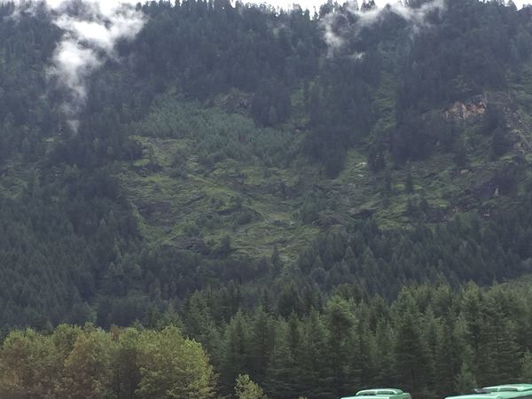 Scenics - Nature Forest Kasol The Himalayas Lush Foliage Tranquility Mountain Land
