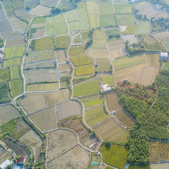 Agriculture Landscape Environment Rural Scene Aerial View Patchwork Landscape Farm Scenics - Nature High Angle View Beauty In Nature Field Tranquil Scene Day Tranquility Growth Plant Green Color Land No People Nature Outdoors Plantation