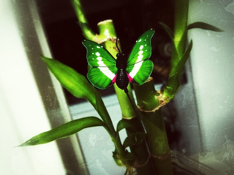Start blooming 🌱🌱 Butterfly Wings Green Green Green!  Lucky Bamboo In My Kitchen Depth Looking Far Baby Its Cold Outside By The End Of The Day