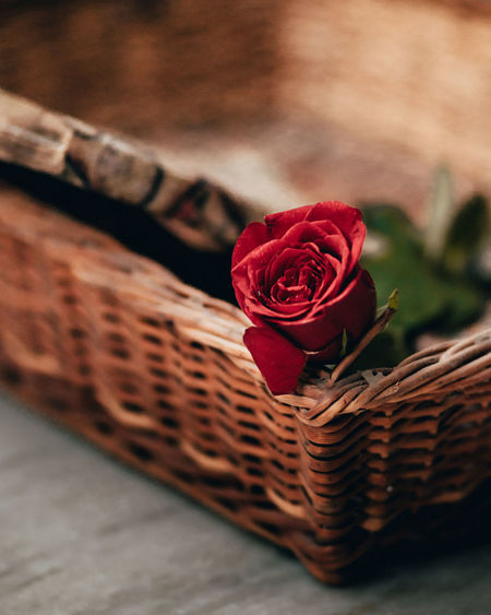 Close-up of red rose in basket
