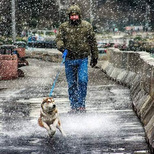Köpek Dog ıslak Rain Snow Istanbul Salacak Portre Best  Day Fine Photo Time Oan