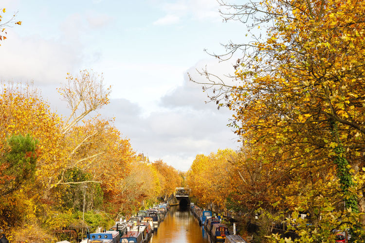 Autumn in London Autumn Tree Change Plant Nature Sky Day Beauty In Nature Transportation Orange Color Mode Of Transportation Cloud - Sky Water Bridge Outdoors No People Growth Yellow River Leaf Autumn Collection Fall London Autumn colors Tranquil Scene Autumn Mood