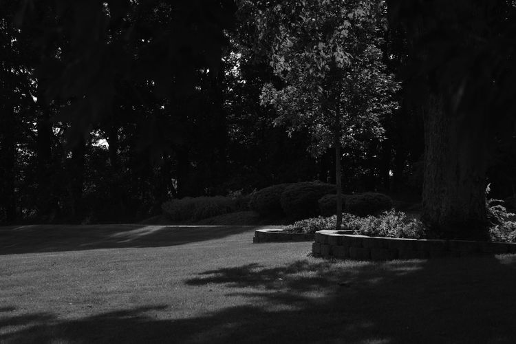 Beauty In Nature Blackandwhite Grassy Grey Growth Monochrome Nature Night No People Outdoors Scenics Sky Tranquil Scene Tranquility Tree