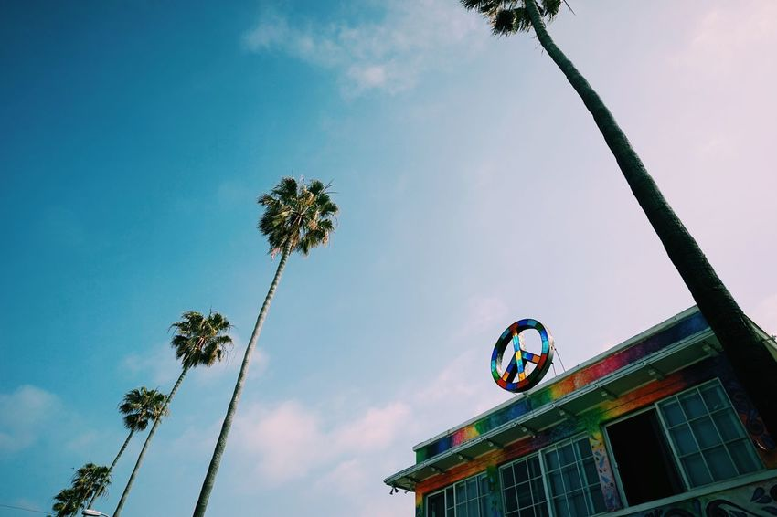 Peace // Palm Tree Low Angle View Tree Sky Growth No People Outdoors Nature Day