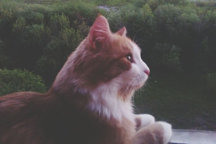 Яшка☀ Animal Domestic Cat Nature Day Cloud - Sky