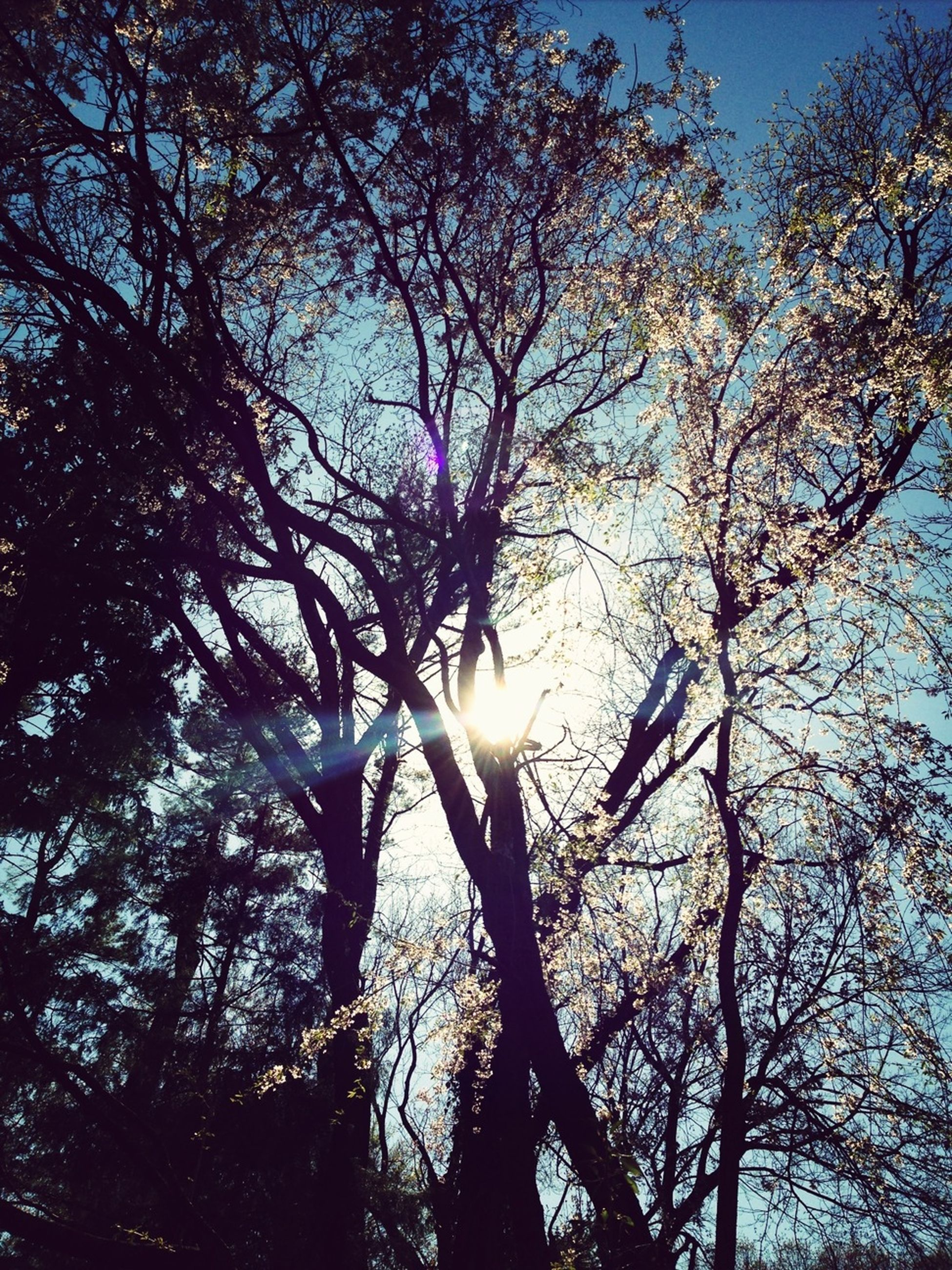 tree, branch, sun, low angle view, bare tree, silhouette, nature, beauty in nature, tranquility, growth, sunlight, sky, tree trunk, sunbeam, back lit, scenics, lens flare, tranquil scene, outdoors, no people