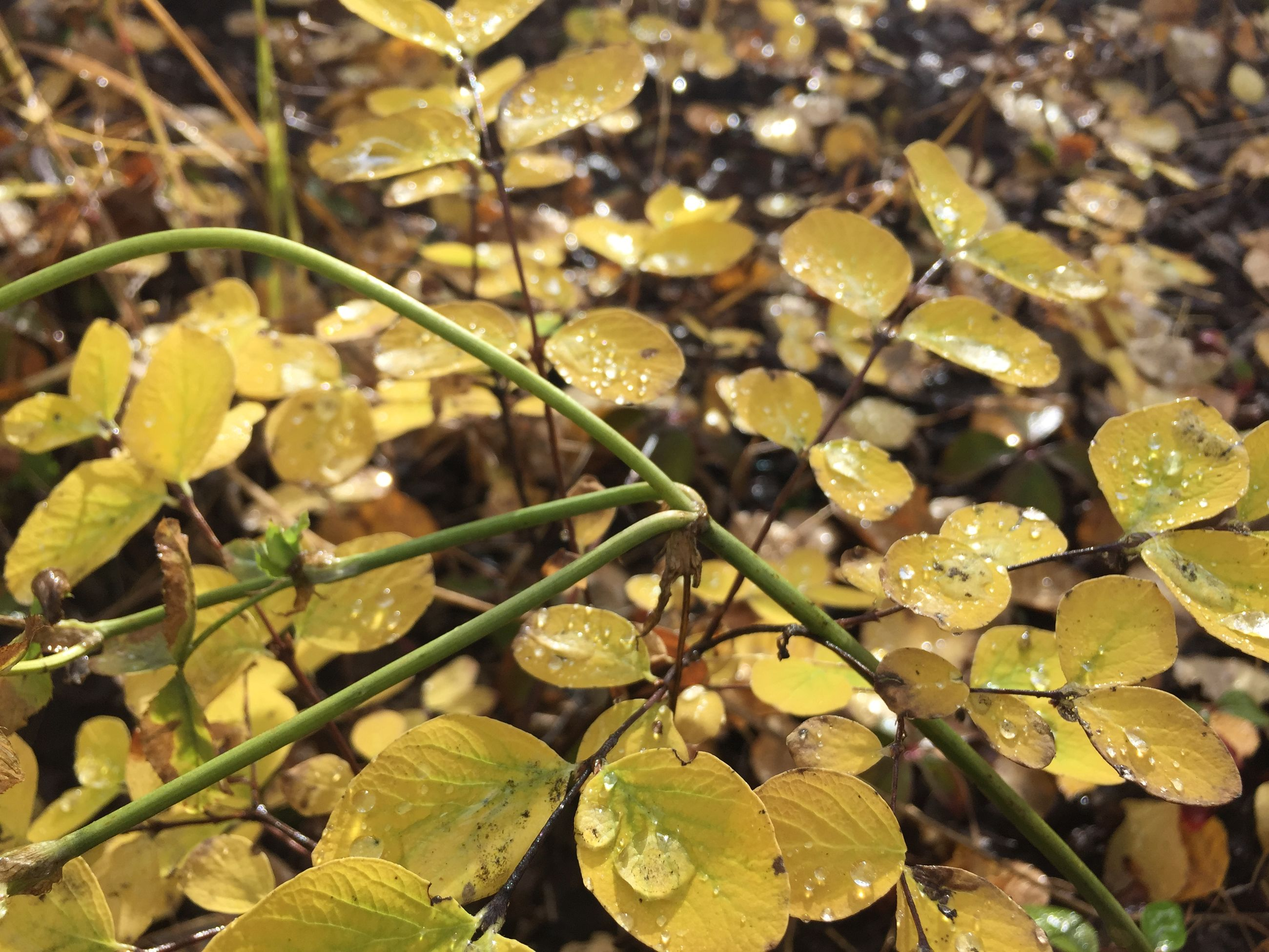 leaf, growth, nature, water, close-up, plant, leaves, beauty in nature, wet, high angle view, green color, tranquility, fragility, season, focus on foreground, day, outdoors, drop, no people, autumn