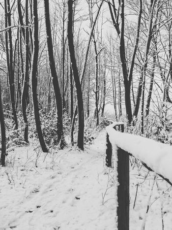 Blackandwhite Black And White Black & White Landscape Landscape_Collection Nature Winter EyeEm Nature Lover Nature_collection Eye4photography