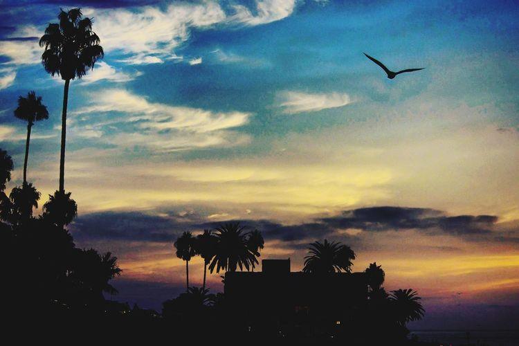 Light Painted Sky Landscape Outdoor Photography California San Diego La Jolla, California Bird Tree Flying Sunset Palm Tree Silhouette City Sky Cloud - Sky Dramatic Sky Atmospheric Mood Romantic Sky Cloudscape