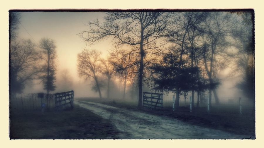 Heavy Morning Fog - Tree Nature No People Bare Tree Fog Outdoors Wet Sky Tranquility Day Scenics Cold Temperature Beauty In Nature Outdoor Photography Samsungphotography Samsung Galaxy S6 Edge Gate Drive Way Fence Fence Post