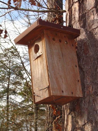 Birdhouse Nature Outdoors Tree Wood - Material