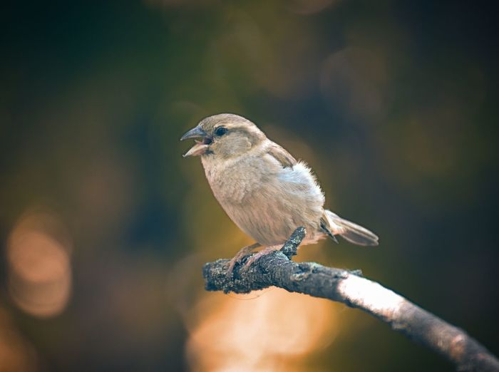 Blur Bokeh Wood Nature Bird Close-up