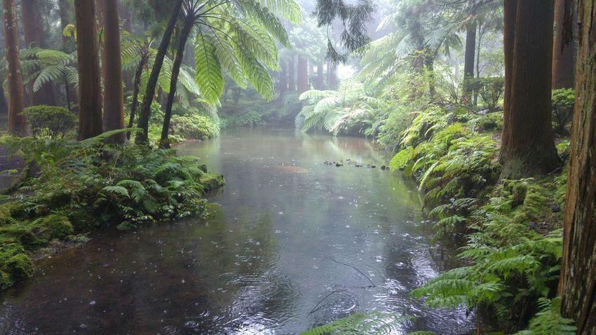 Sao Jorge Island Sete Fontes Azores Islands Garden Water Reflections Relaxing Water Silence