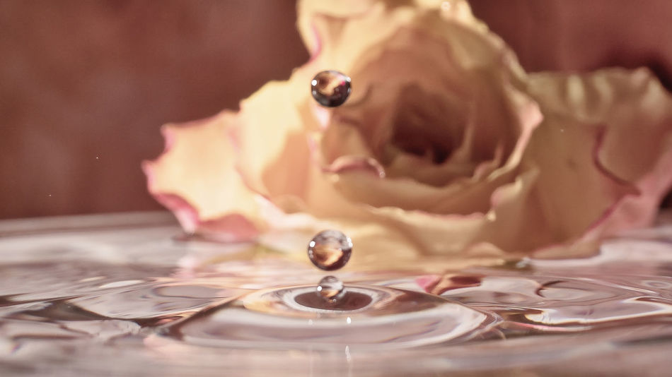 Close-up Drops Drops Of Water Drops_perfection EyeEmNewHere Eyem Gallery Kitsch Kitsch Oder Kunst No People Rose - Flower Rose🌹 Water